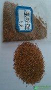 黄玛咔种子